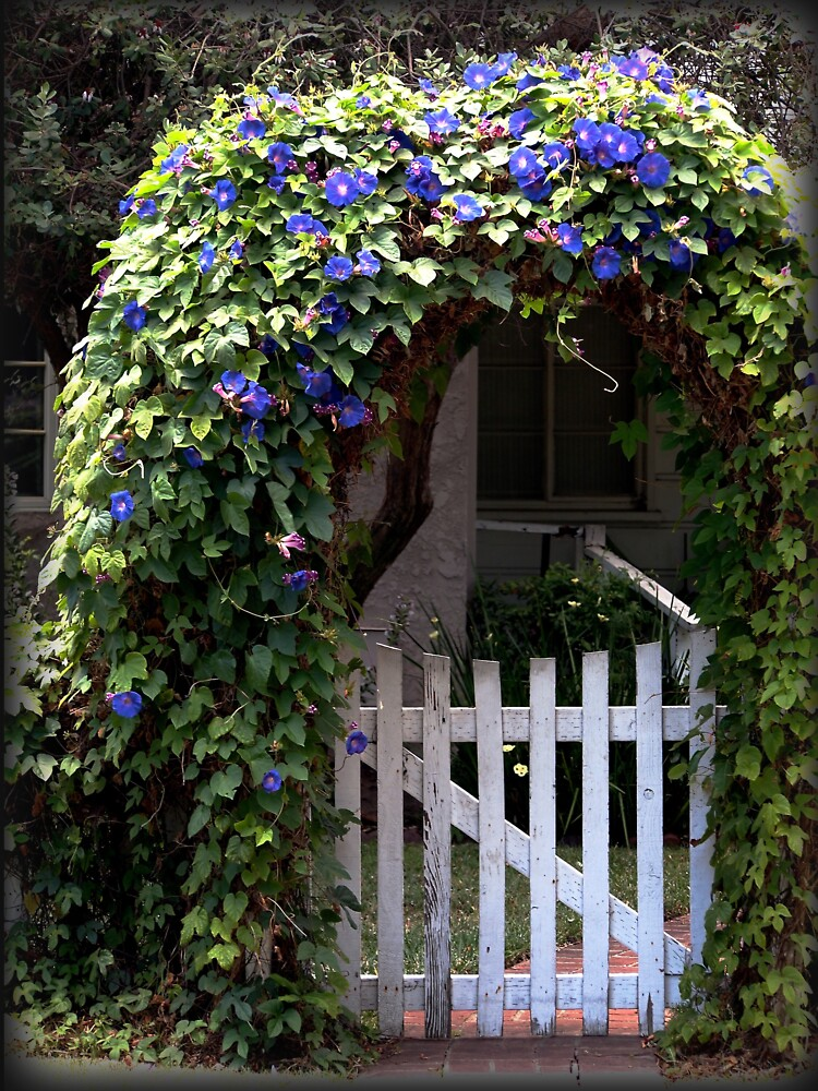 Morning Glory Gate from A Gardener's Notebook by douglasewelch