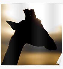 Sunset Giraffe Poster