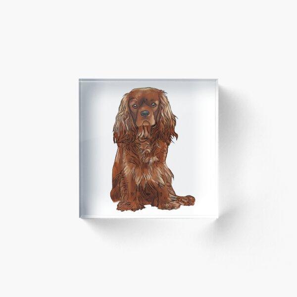 Cavalier King Charles Spaniel - Ruby Acrylic Block