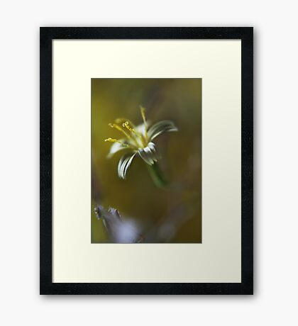 Yellow symphony (from wild flowers collection) Framed Print