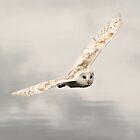 Barn Owl by Ladymoose