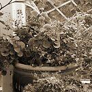Window Plants by Chris Baker