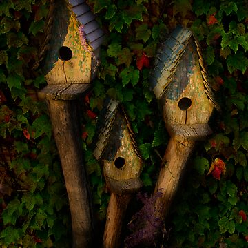 Birdhouses by LOUOATES