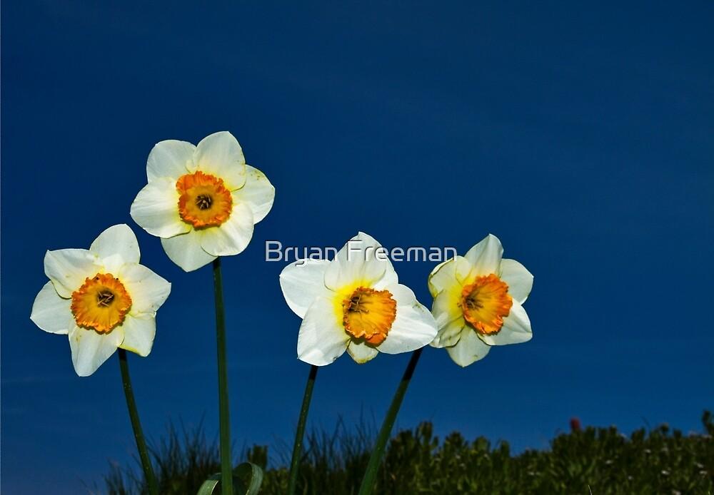 The Deadly Daffodils - Brighton - England by Bryan Freeman