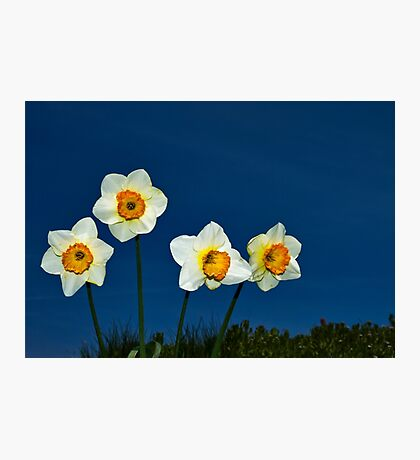 The Deadly Daffodils - Brighton - England Photographic Print
