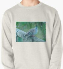 Crested Pigeon Pullover