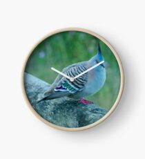 Crested Pigeon Clock