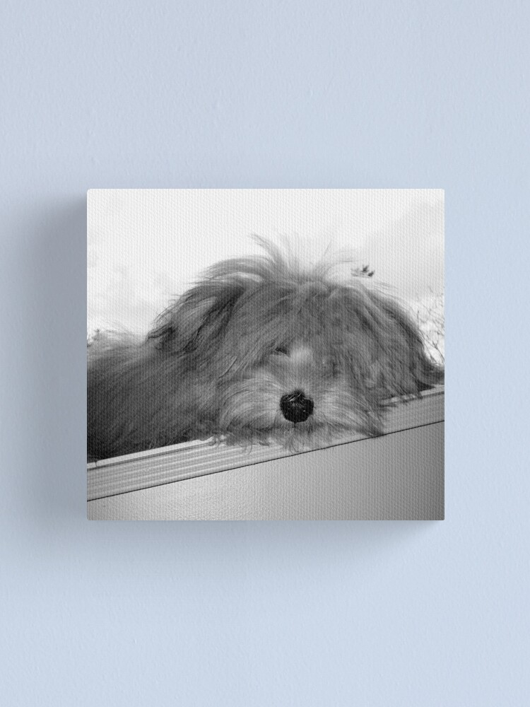 Alternate view of Dog Day Afternoon Canvas Print