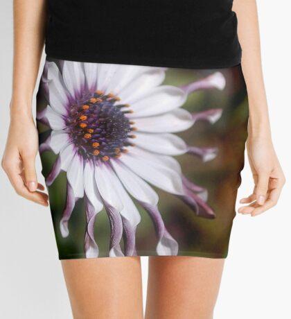 OSTEOSPERMUM – Purple African Daisy Mini Skirt