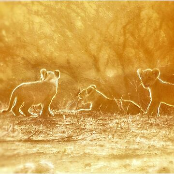 """THE """"THREE"""" LITTLE LION CUBS, a Last light capture - THE LION – Panthera leo by mags"""