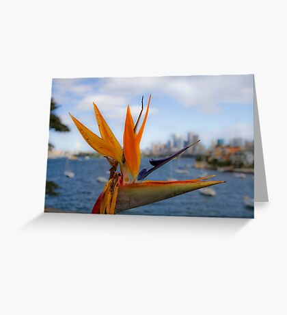 Bird of Paradise (Strelitzia) - Sydney Harbour - Australia Greeting Card