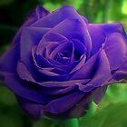 Violet Indigo Blues by ienemien