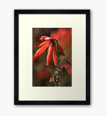 Winters Warmth Framed Print