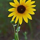 The SUN Flower by Karen Goad