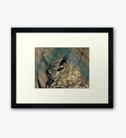 One-Eyed Owl Framed Print