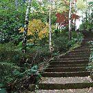 Macedon garden by Varcoe