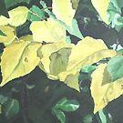Aspen Leaves by Christopher Clark
