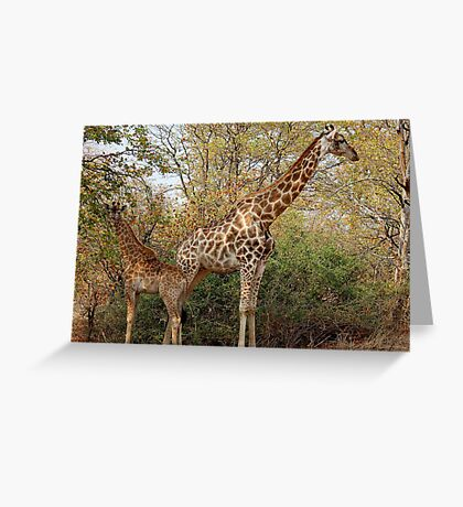 BACK TO BACK, MOTHER AND CHILD IN THE WILD ! Greeting Card