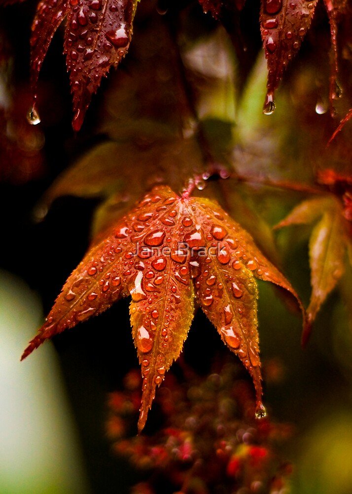When the Rain Comes by Jane Brack