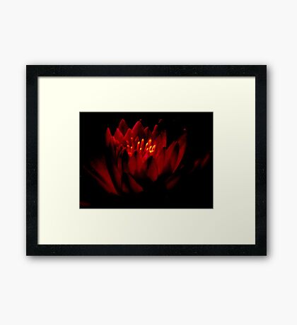 THE   WARM GLOW  OF A   WATER  LILY    Framed Print