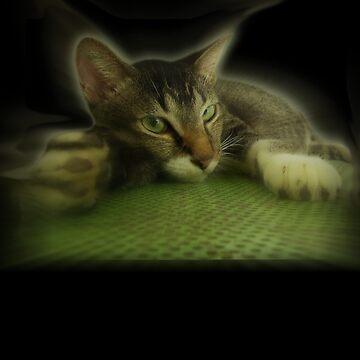 CatX by 3skin