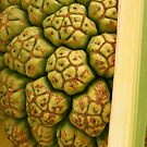 Pandanus Fruit  by Caroline Angell