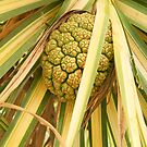 Pandanus Fruit 3 by Caroline Angell