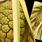 Pandanus Fruit Art by Caroline Angell
