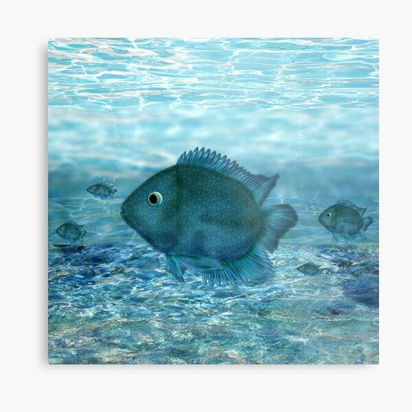 Blue fish... Metal Print