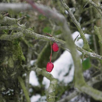 Two Berries by mikequigley