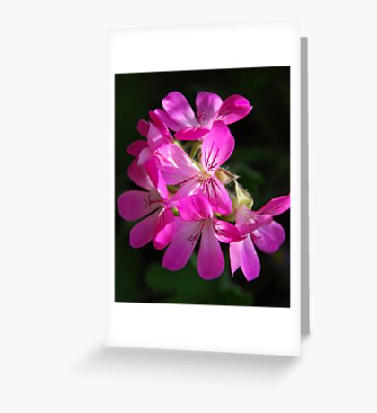 attar of rose Greeting Card