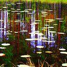 Fall Pond by Pauli Hyvönen