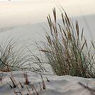 Dune by supermimai