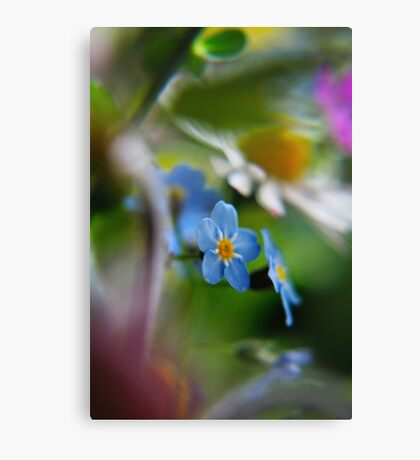 Forget-Me-Not between flowers (from wild flowers collection)  Canvas Print