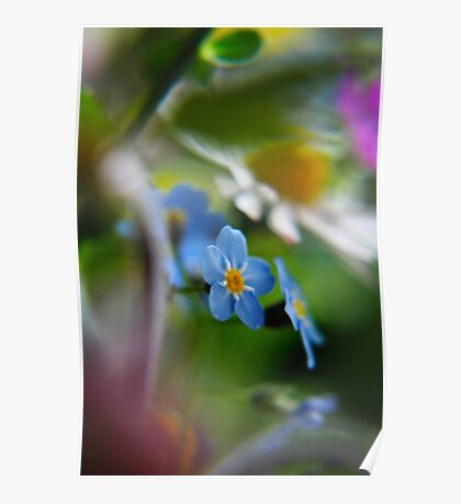 Forget-Me-Not between flowers (from wild flowers collection)  Poster
