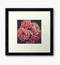 Roses in the night garden  Framed Print