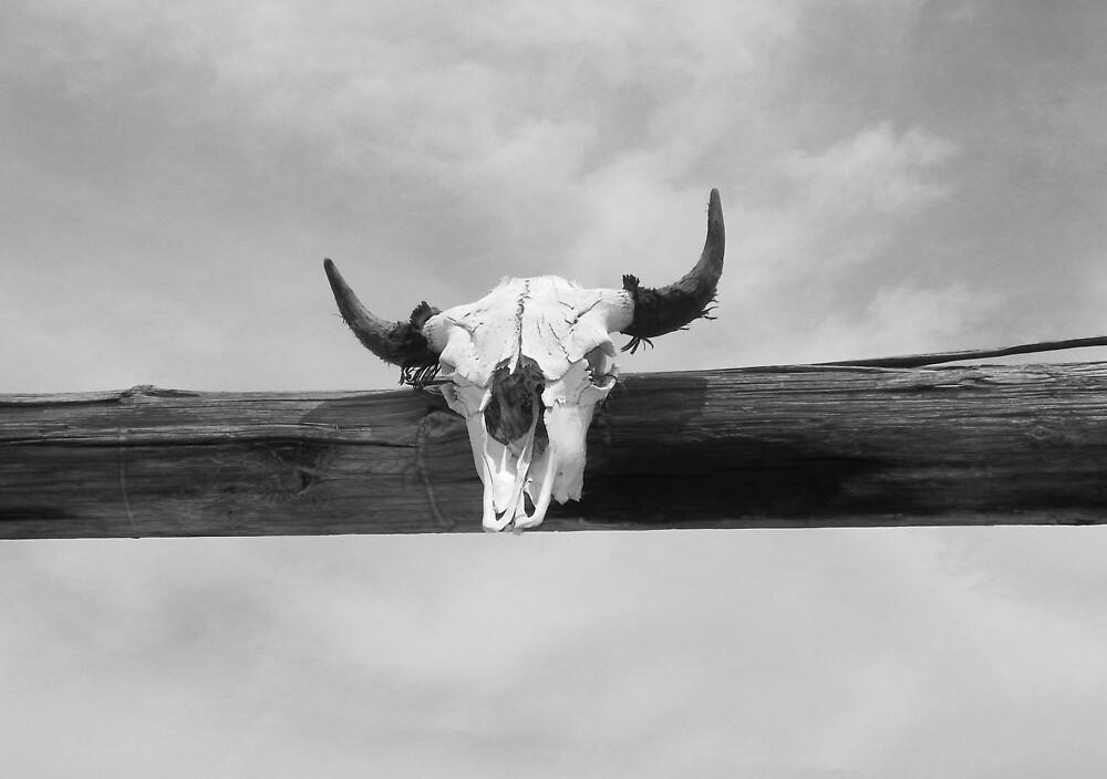 Bull Skull  by Patriot76