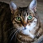 Kitty by Sketchbrooke