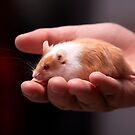 Mouse in hand by Tim Miller