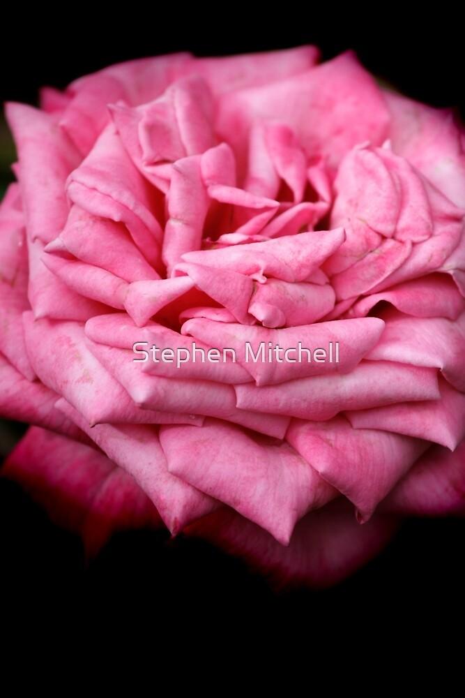 Pink Rapture by Stephen Mitchell