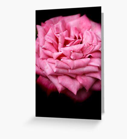 Pink Rapture Greeting Card