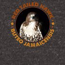 Beautiful Red Tailed Hawk Portrait for Falconers and Bird Watchers by Robert Diebold