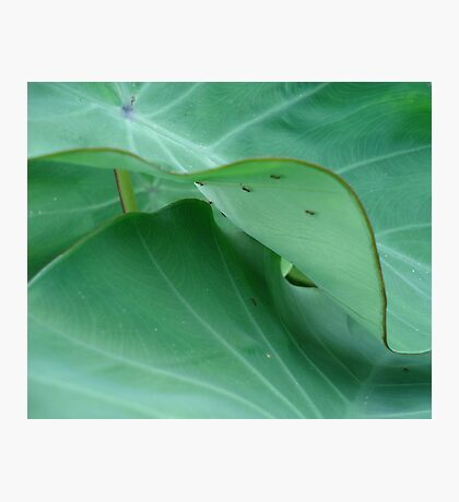 Elephant ears with ants Photographic Print