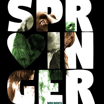 English Springer Spaniel <3 by waldogs