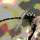 Abstract dragonfly on rock by derbyshireduck