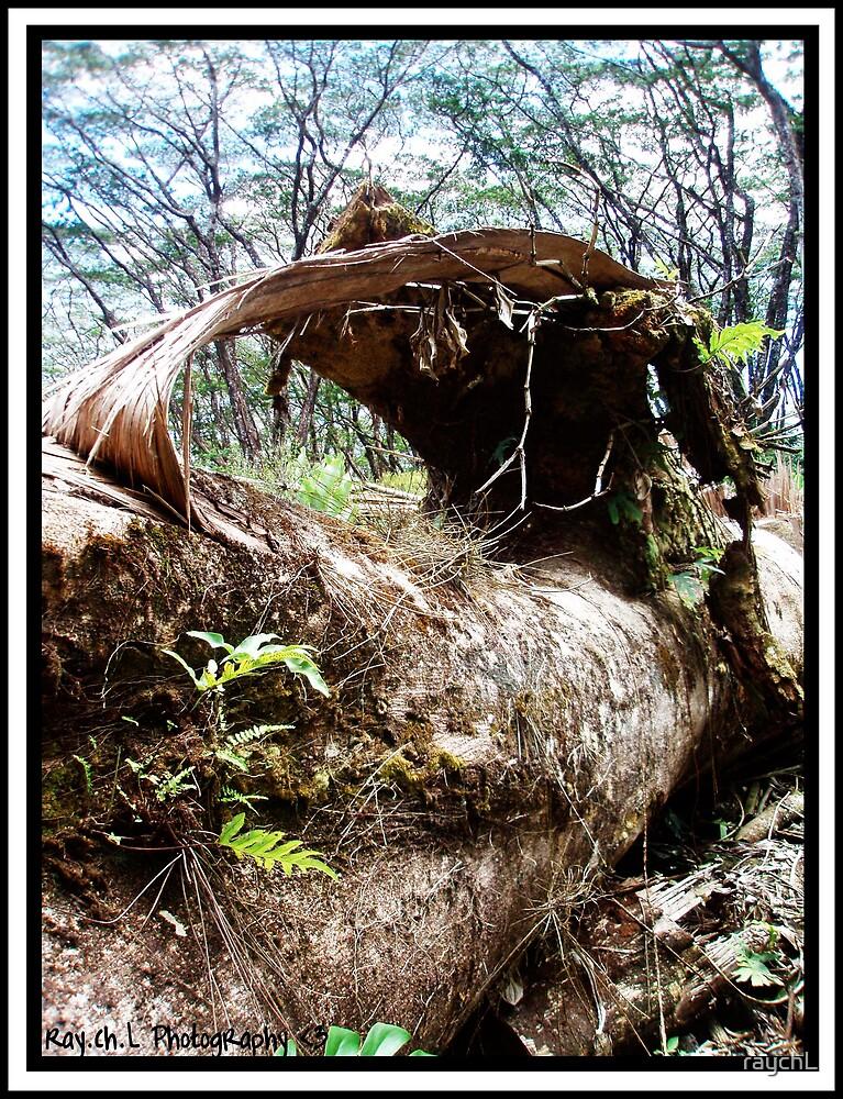 Fallen Tree by raychL