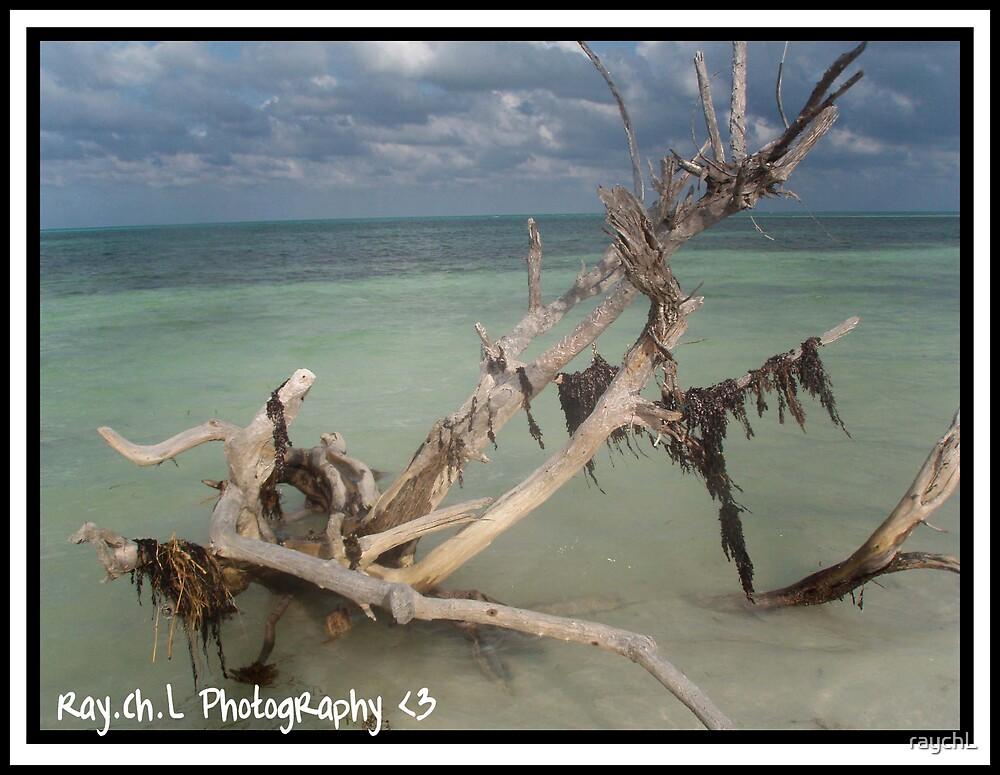 Driftwood by raychL