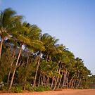 Coconut Grove at Dawn by Richard  Windeyer