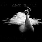 A white bird by deahna