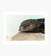 Shingle Back Lizard called Mouse Art Print